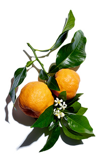 Bitter orange ingredient