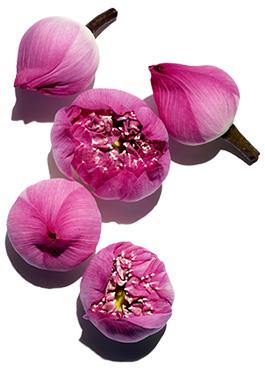 Lotus ingredient