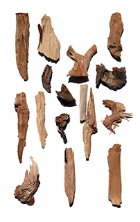 Sandalwood ingredient
